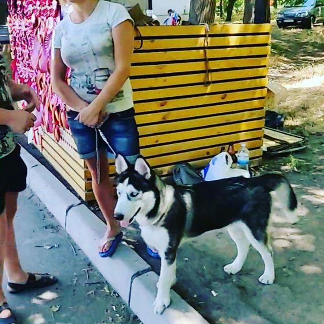 Сегодня в парке Шевченко выставка собак приходите...
