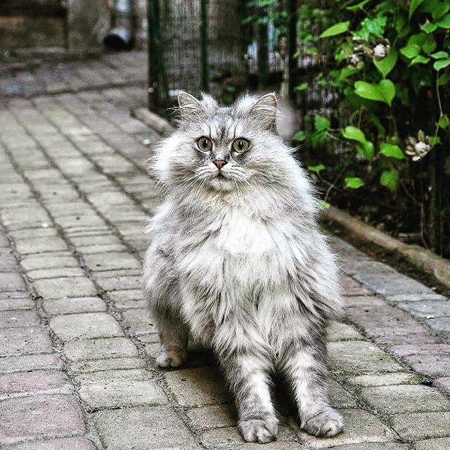 Даже Котейки в Одессе эммммоциональные...