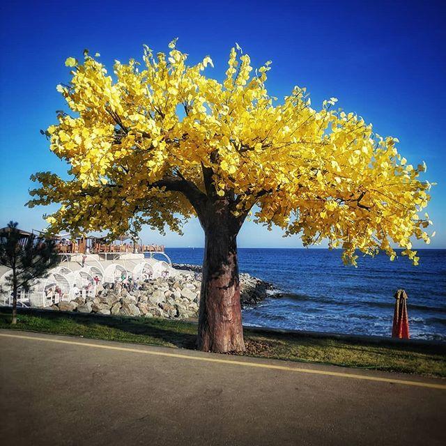 Осень в Одессе - нЕобычные прогулки