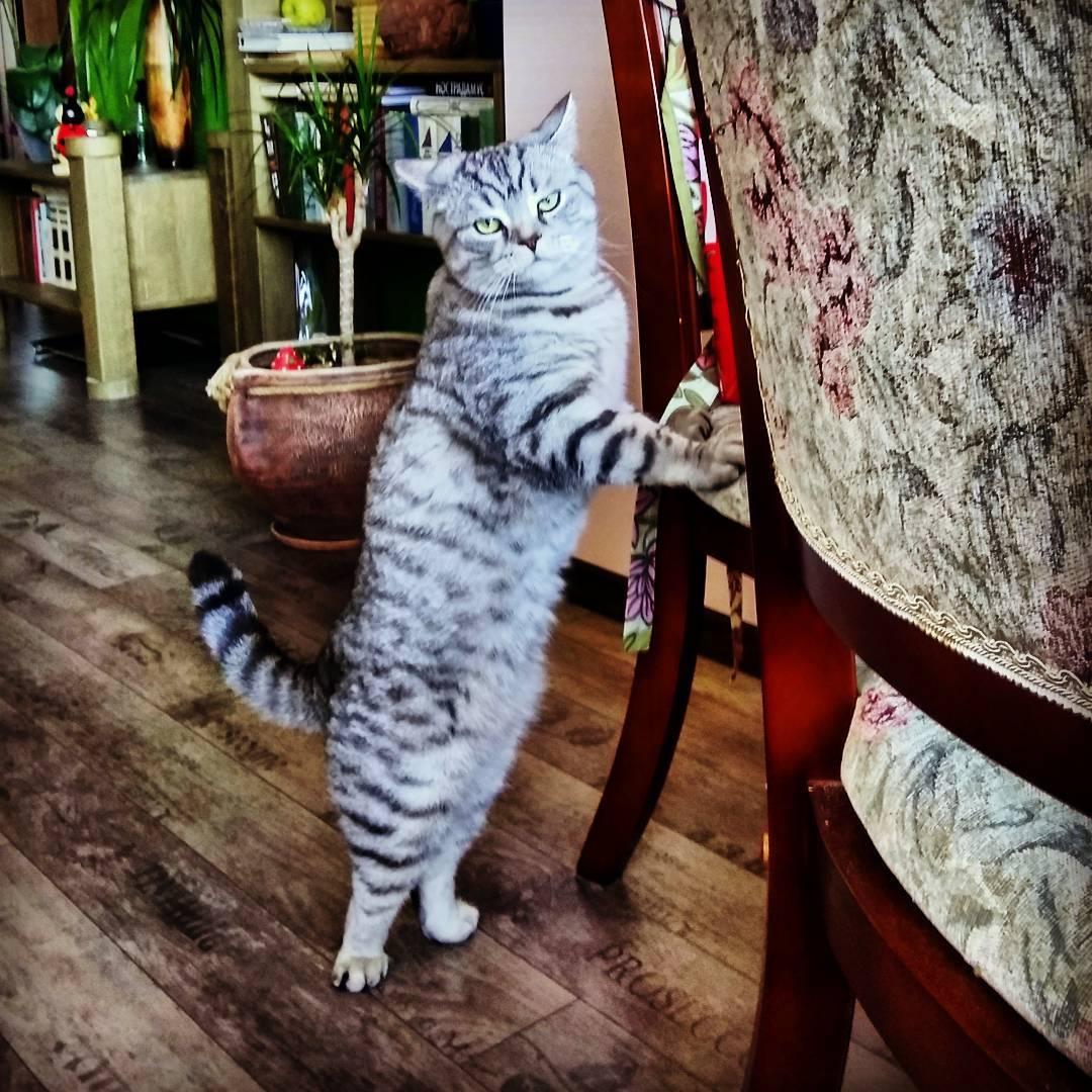 Где моя колбаса ???