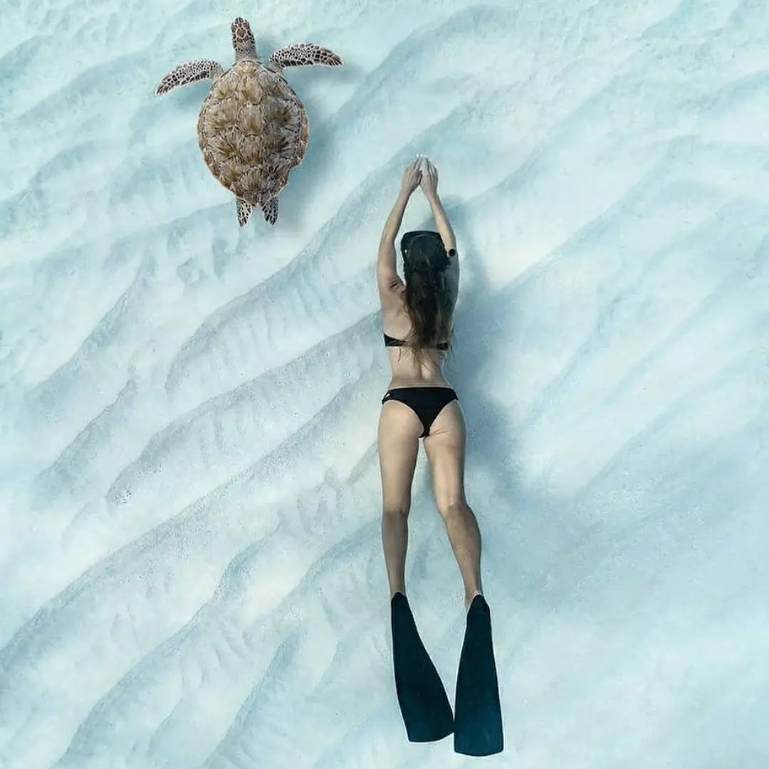 Хватит сидеть дома как черепаха - Идём на Экскурсию